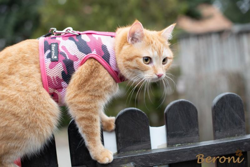 kattenharnas kopen