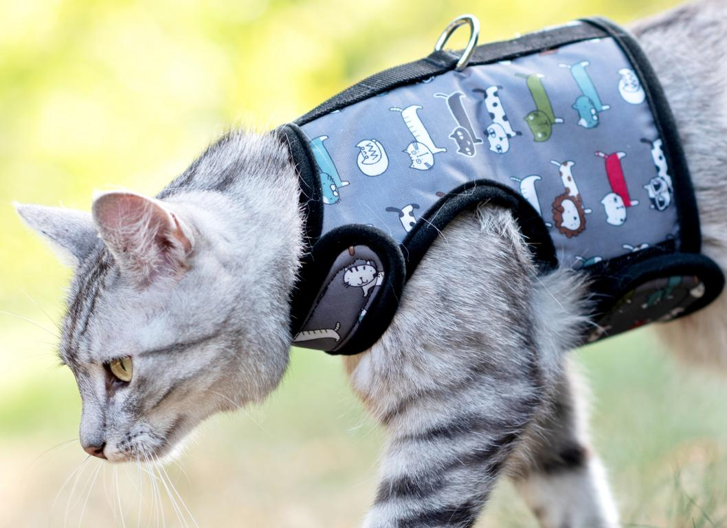 kattenharnas-walking-jacket-kat-kattentuigje