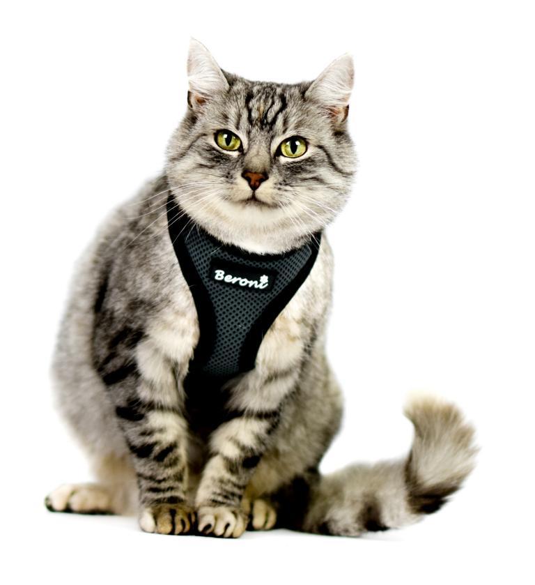 kattentuigje kattenharnas beste luxe zwart