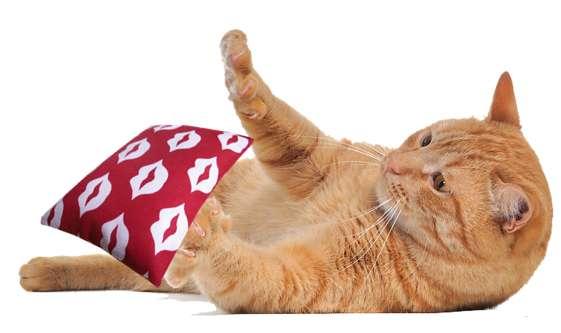 Speelkussen LIPS met biologische kattenkruid of valeriaan 9 x 14 cm