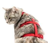Beste Kattentuigje verstelbaar Safety Harness Classic rood