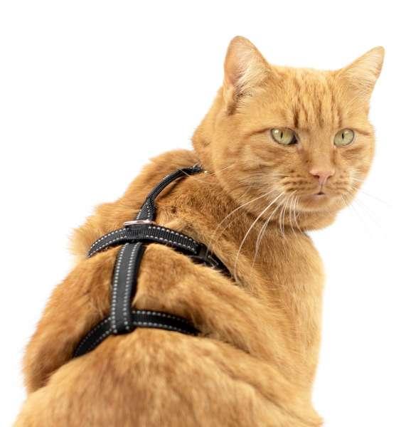 Beste Kattentuigje verstelbaar Safety Harness Pro reflecterend zwart