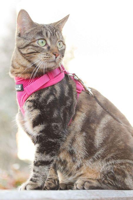 kattentuigje-roze-tuig-katt-harnas